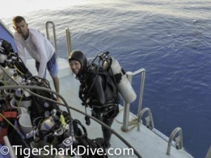 scuba cageless with sharks