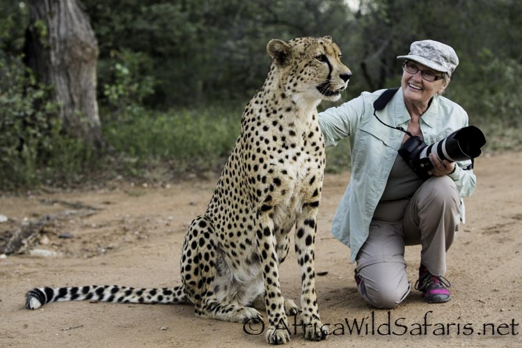 It is always so much fun to watch each guest's reaction when we can get close to cheetahs and experience their morning routine (hunting of course) with them. This walking with cheetah program is a great way to learn about this endangered predator the message goes straight to your heart