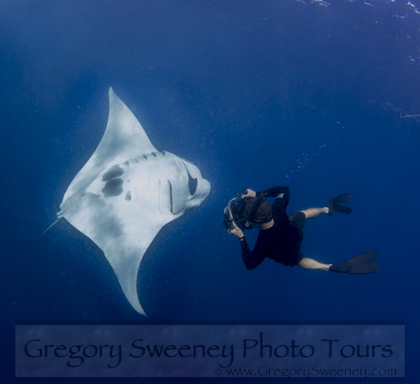 swim with giant manta rays