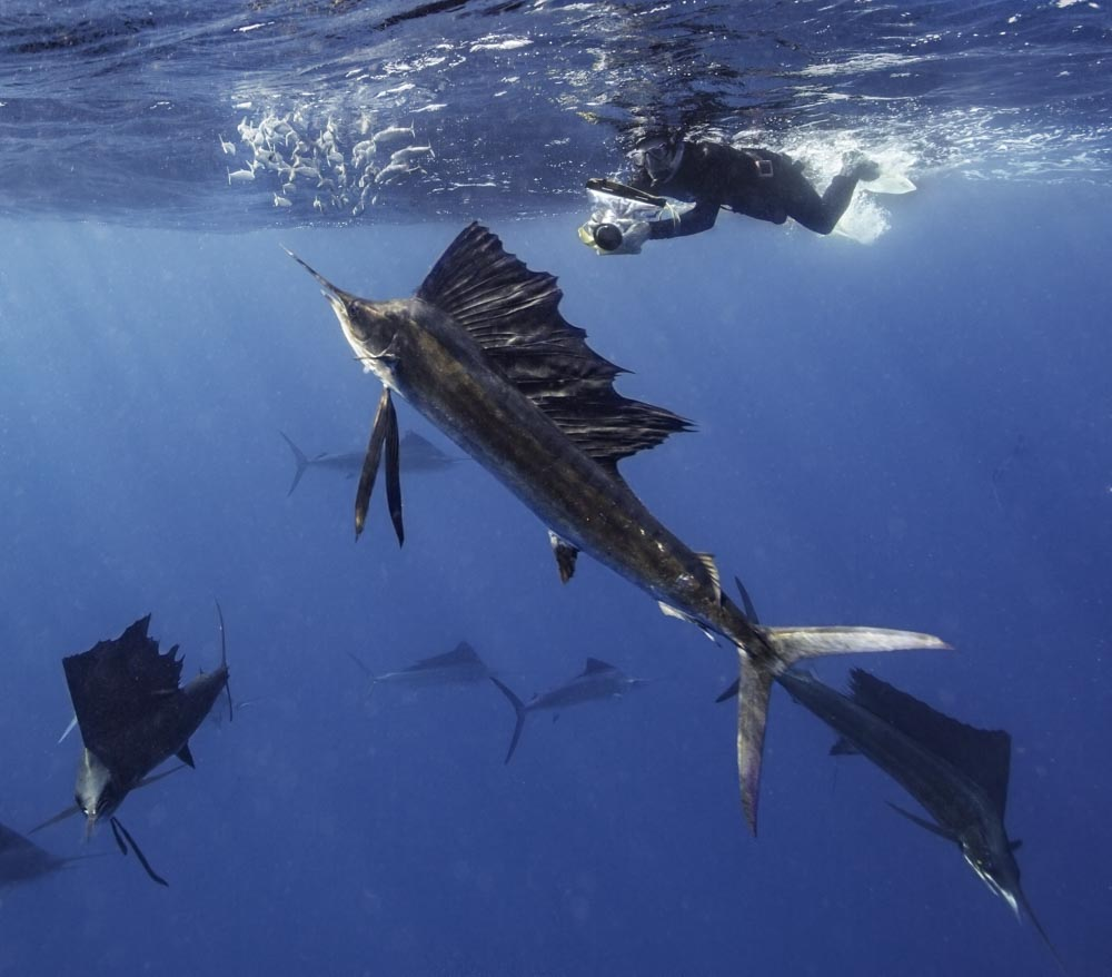 snorkel and photograph sailfish in Mexico