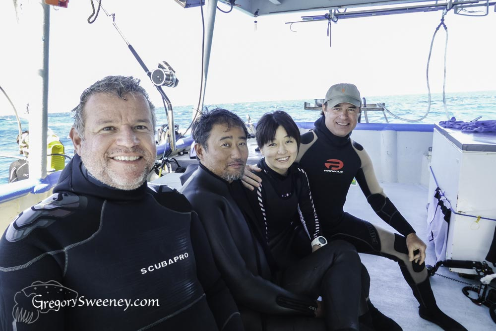 Tiger shark dive guests