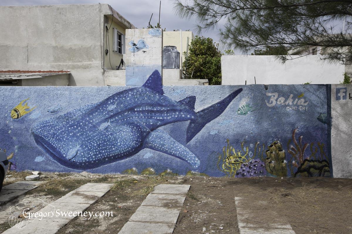 Isla Mujeres Sailfish