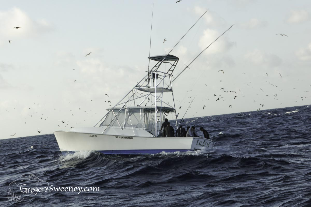 Sailfish Charter Boat