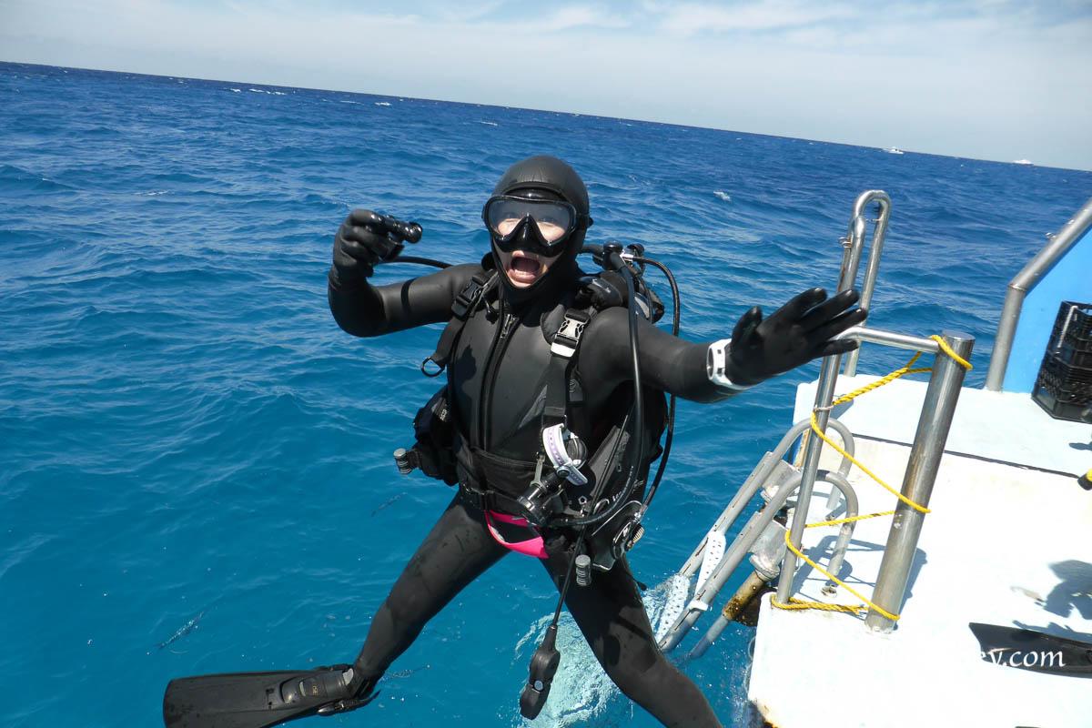 tiger shark scuba dive guests