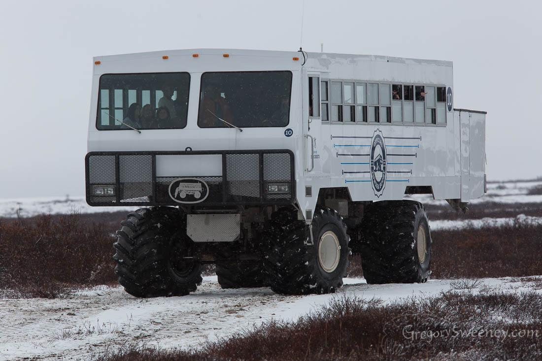 Tundra Buggy for polar Bears