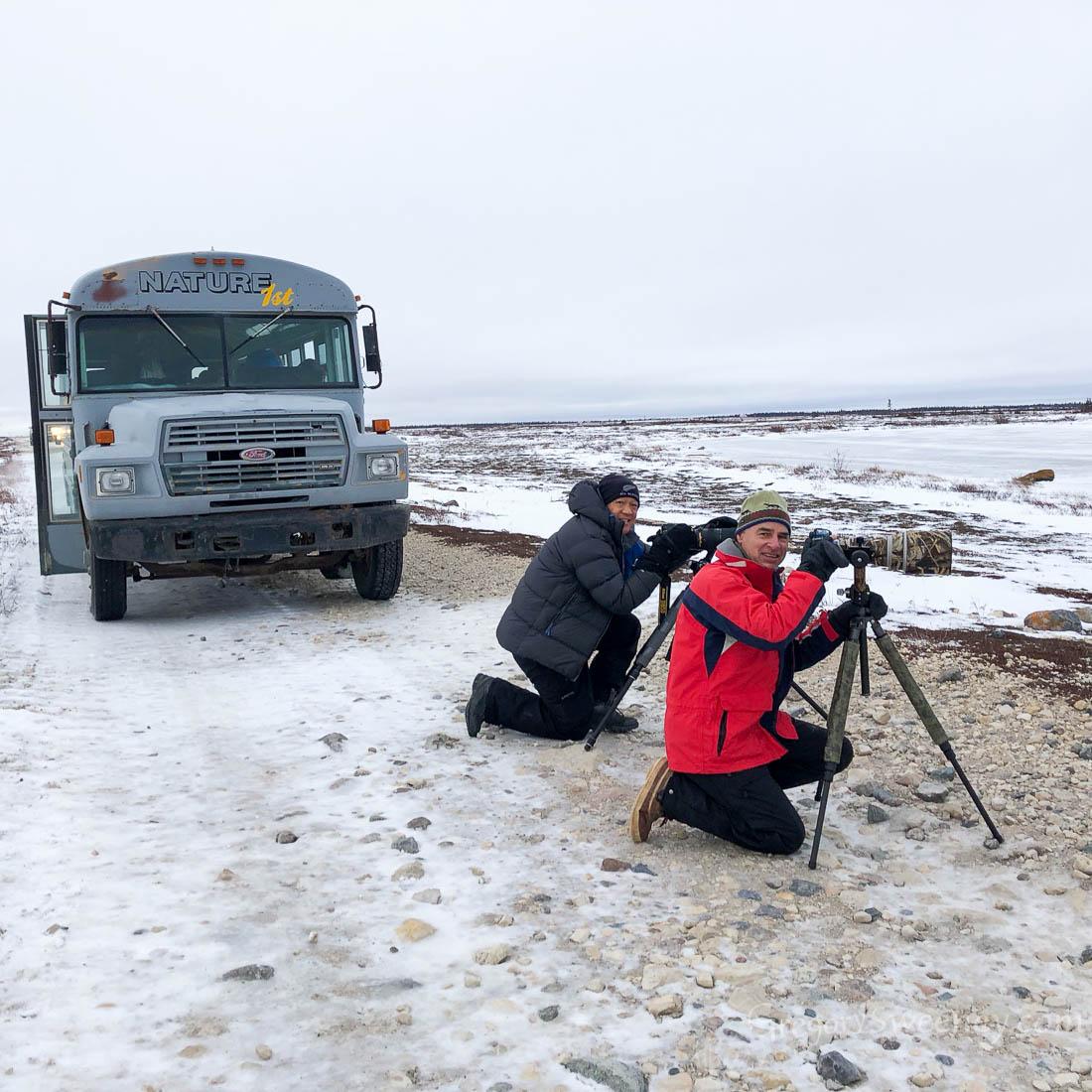 Photographing polar bears