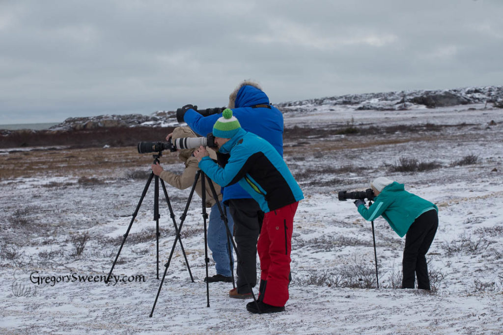 photograph outside the vehicle on our polar bear trip