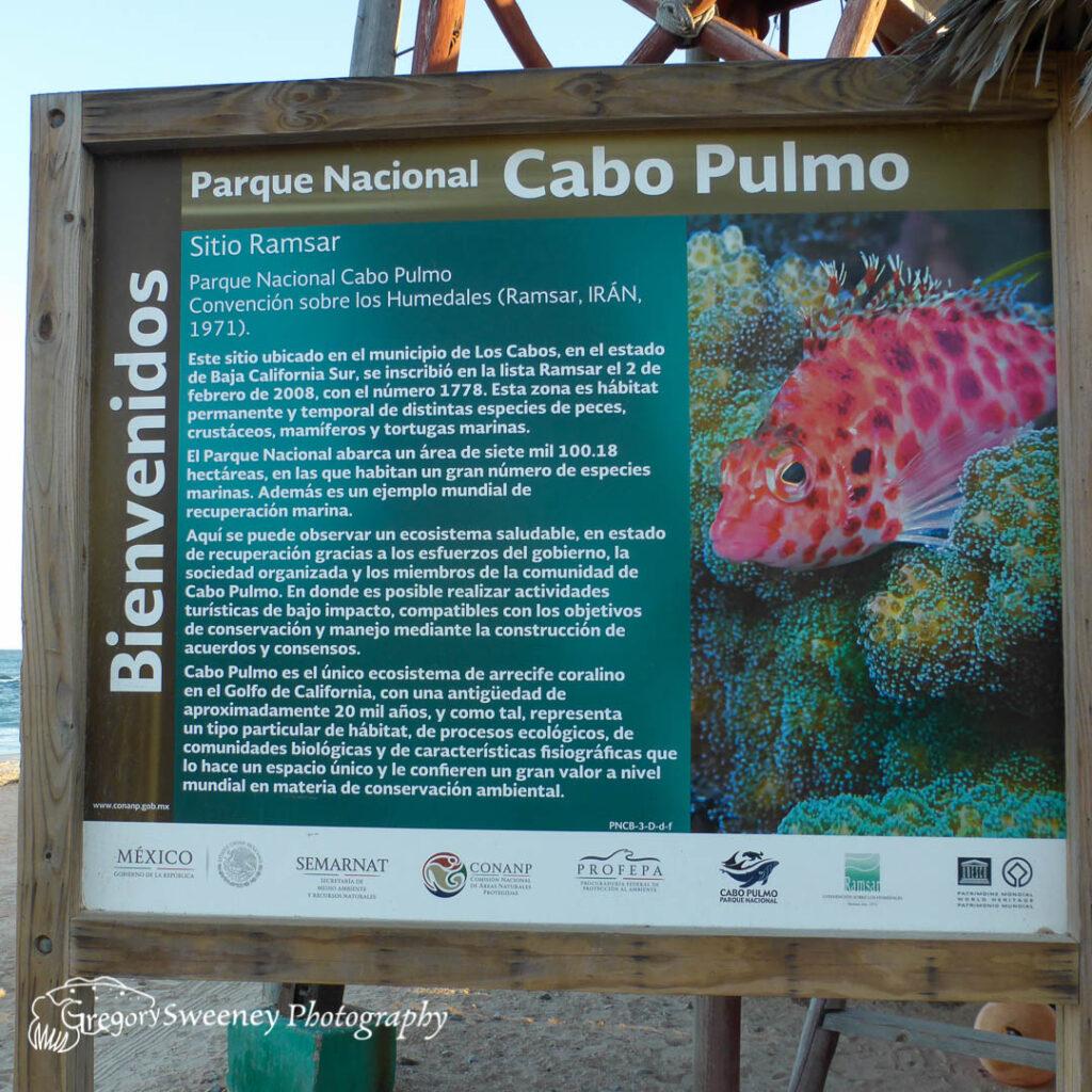 dive Cabo Pulmo