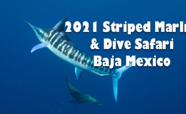 Striped Marlin Sardine Run Trips
