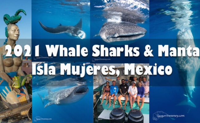 Snorkel with Whale Sharks Mexico