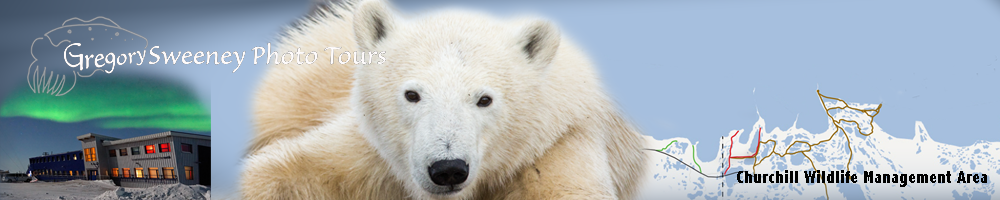 Polar Bears in Churchill Photo Tour