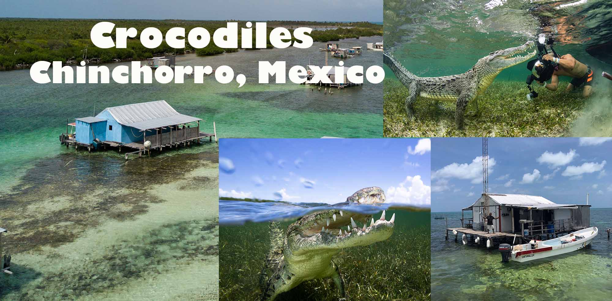 photographing American crocodiles in Chinchorro, Mexico