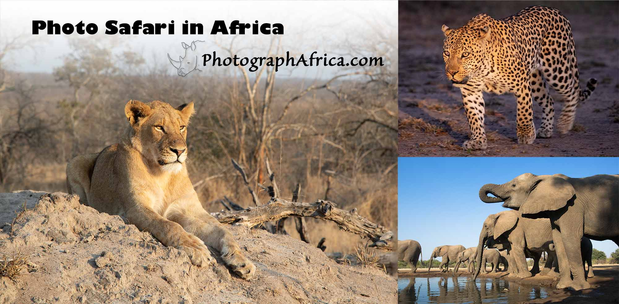 Photographic Safari in South Africa with big cats